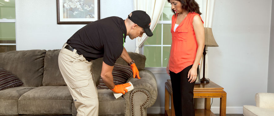 Lake Fern, FL carpet upholstery cleaning